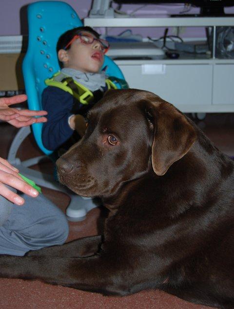 Taller asistido con perros: habilidades sociales y expresión corporal